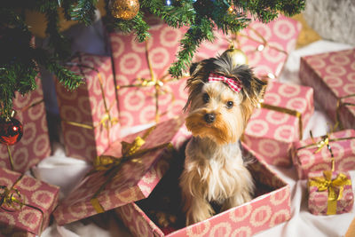 Try Putting The Dog In A Present Box Under Tree Or Fitting Cat Out With Big Bow For Classic Christmas Card Feel