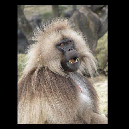 Blavatsky s baboon pdf writer