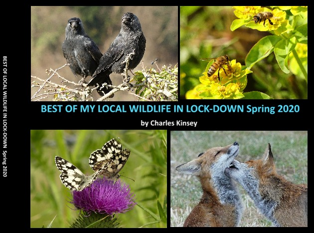 BEST OF MY LOCAL WILDLIFE IN LOCK-DOWN Spring 2020